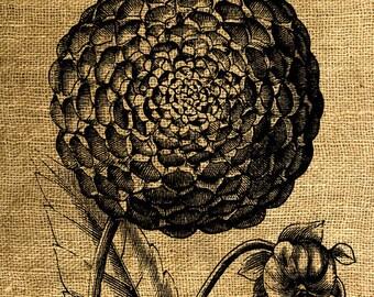INSTANT DOWNLOAD Vintage Flower Illustration - Download and Print - Image Transfer - Digital Sheet by Room29 Sheet no. 592