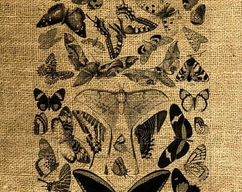 INSTANT DOWNLOAD Vintage Antique Book Butterflies Illustration - Image Transfer - Digital Sheet by Room29 - Sheet no. 642