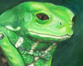 Waxy Monkey Tree Frog II - 5x7 inch giclee print matted to fit an 8x10 frame