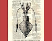 Vintage squid (squid2) - upcycled 8x10 1898 dictionary page print - BONUS - Buy 3 Prints, Get 1 More For FREE