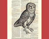 Vintage Wise Old Owl (owl2) - upcycled 8x10 1898 dictionary page print - BONUS - Buy 3 Prints, Get 1 More For FREE