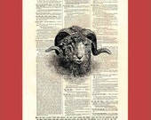 Majestic Sheep's Head with Corkscrew Horns - upcycled 8x10 1898 dictionary page print - BONUS - Buy 3 Prints, Get 1 More For FREE