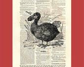 Deja vu dodo - upcycled 8x10 1898 dictionary page print - BONUS - Buy 3 Prints, Get 1 More For FREE