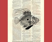 Fierce Fish (fish09) - upcycled 8x10 1898 dictionary page print - BONUS - Buy 3 Prints, Get 1 More For FREE