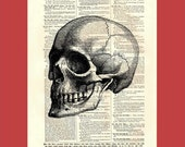 Grisly Grinning Skull (skull8) - upcycled 8x10 1898 dictionary page print - BONUS - Buy 3 Prints, Get 1 More For FREE