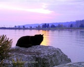 Another Day Ends, Cat at Sunset, gift 30, fine art photography, print or cards, home decor, mauve, landscape