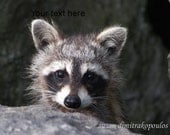 Raccoon Baby, greeting card  5 x 7, blank inside to write your own msg