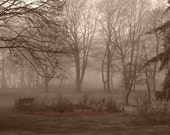 Scenery photograph - Misty Morning - sepia, home office decor, gift 30, trees, forest, Canada