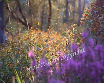 Forest Flowers, wall art, fine art photograph, home office decor, spring, lavender, coral, peach, gift idea 20