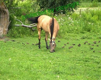 Dinner With Friends - horse and sparrows, fine art photograph, wall art, home cottage decor, horse lover gift, gift 20