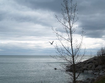 Canadian scenery, After the Storm, Bluffer's Park, Toronto, wall art, fine art photograph, home decor, gift 20