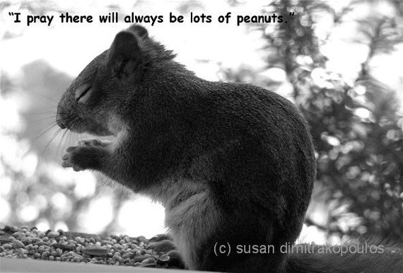 The Peanut Prayer, Squirrel greeting card, blank, write your own message, fun card, squirrel lovers, nature photo, wildlife, grey squirrel