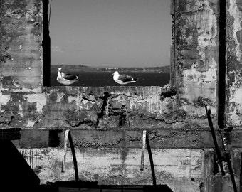 Birds of The Rock