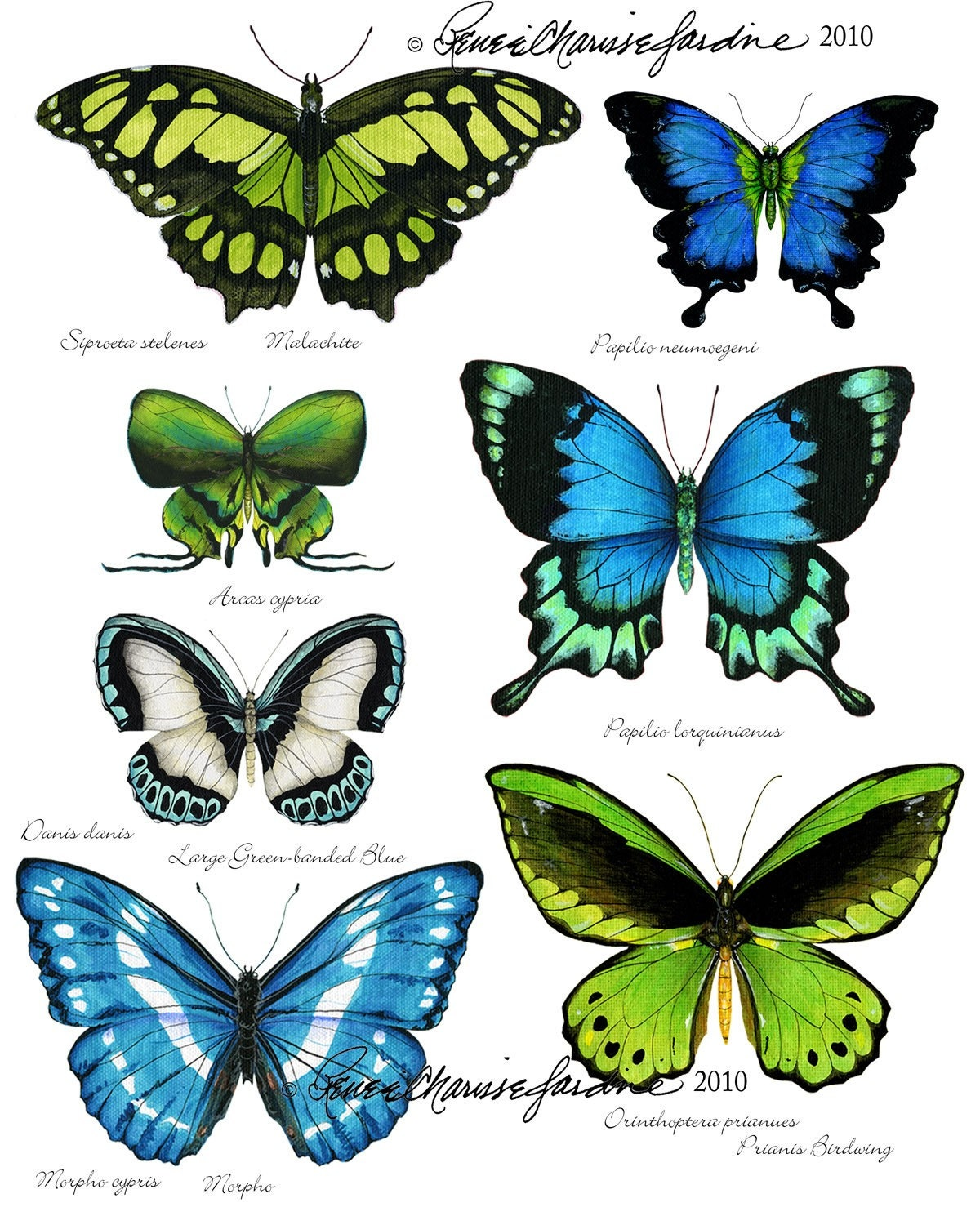 a study of butterflies A study on the diversity of butterflies - free download as word doc (doc), pdf file (pdf), text file (txt) or read online for free.
