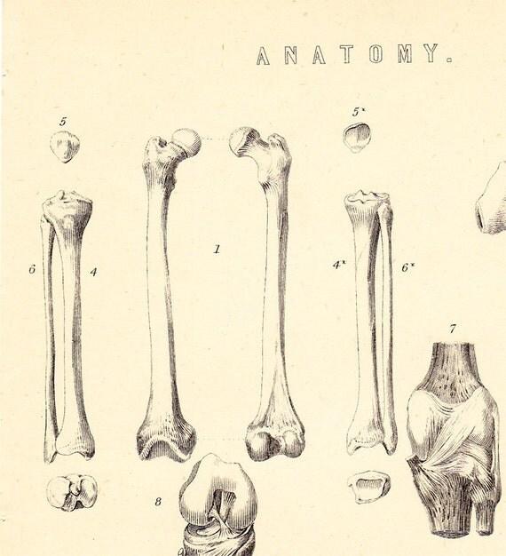 1870 Antique Victorian ANATOMY engraving, BONES, backbone, femur, bones of the leg and foot