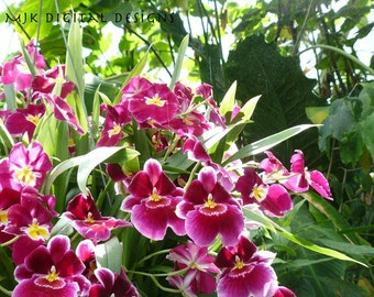 Orchid Photograph print