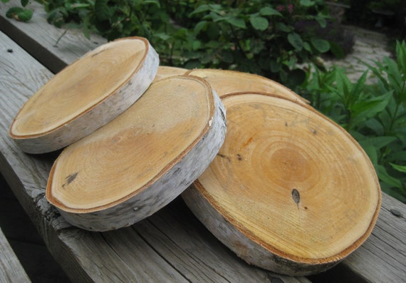 12 birch bark tree wood slices rustic natural by for Wood trunk slices