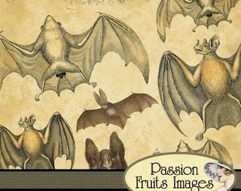 Vintage Bats Digital Collage Sheet PIF Freebie-- Instant Download