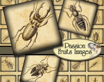 Antique Insect Engravings 1 inch Squares- Digital Collage Sheet-- Instant Download