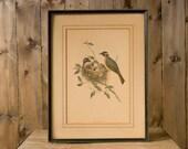 Vintage Framed Bird Print - Ixus Sinensis