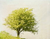 Tree photograph - original fine art photography print - tree, green, landscape, dreamy, summer, rusty, sky - photographybykarina