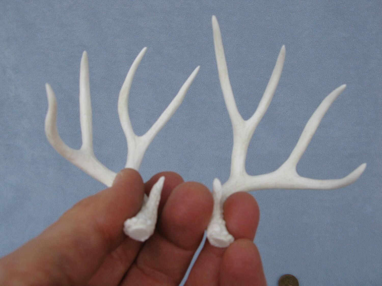 Antlers Mule Deer Miniature Trophy Dollhouse Accent Decor