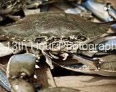 Up Close Crab - 8x12 Fine Art Print - Baltimore