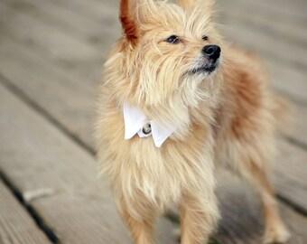 White Pointed Dog Collar