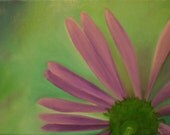 Original Oil Painting Daisy by Meaghan Louise