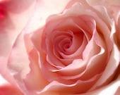 Pink Rose Photography, Pretty Flower, Feminine Romantic, Bedroom Decor, 8x10 print. Blush...
