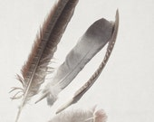 Feather Nature Photography Rustic Minimalist Neutral 8x10 Print Feathers