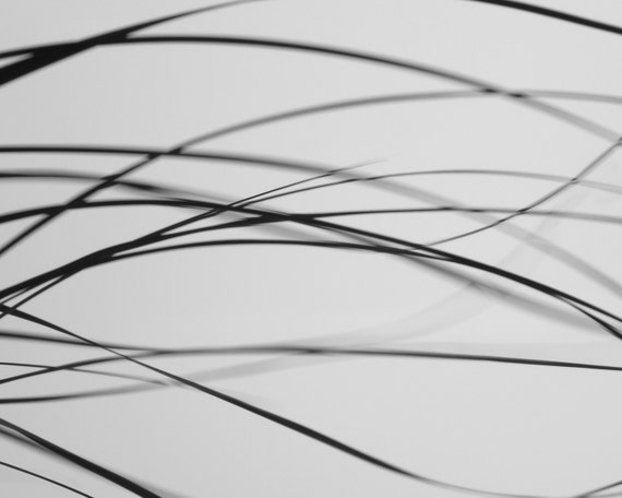 Abstract Black and White Photography 10x8 Print. Whispers...