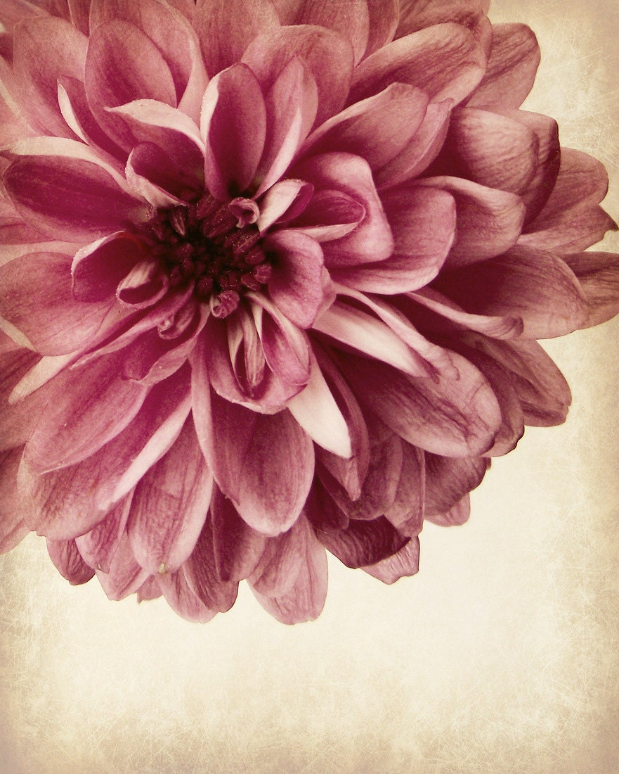 Vintage Style Flower Photography Romantic Feminine Home Decor