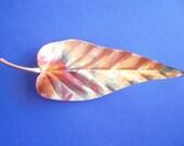 Copper Dogwood Leaf