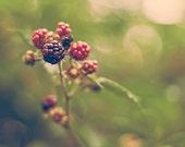 Berry season - 8x12 Inch Fine Art Photography Print