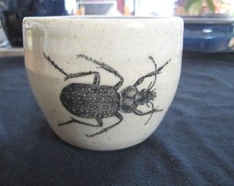 Ground Beetle Mug