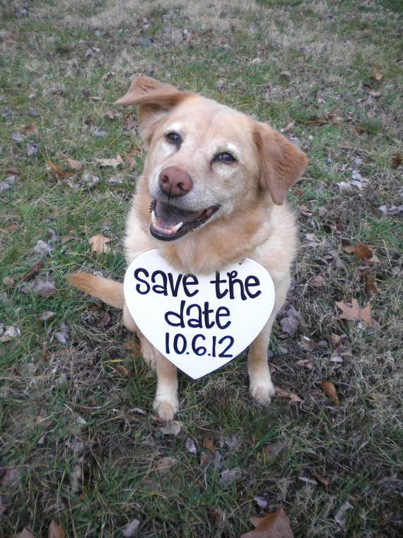 Dog Save the Date Sign With Date Photo Prop engagement photos, save the dates, unique photography prop, pet photo prop