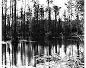 Cypress Gardens B&W photo