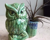 Vintage Owl Mini Planter w/ Airplant, OOAK, 5 dollars to Japan