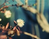 Little Puffs - Fine Art Photograph - annadykema