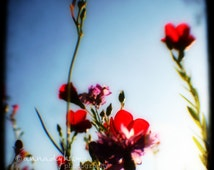 Nature Home Decor - Scarlet Ladies Too -  Fine Art Photography Print