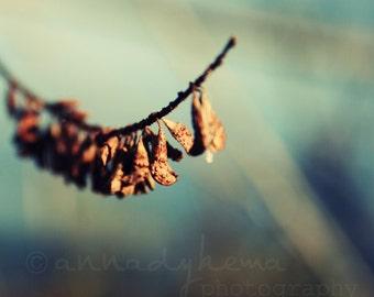 autumn fall nature seedpods ultramarine blue russet brown grey - Twig -  Fine Art Photography Print
