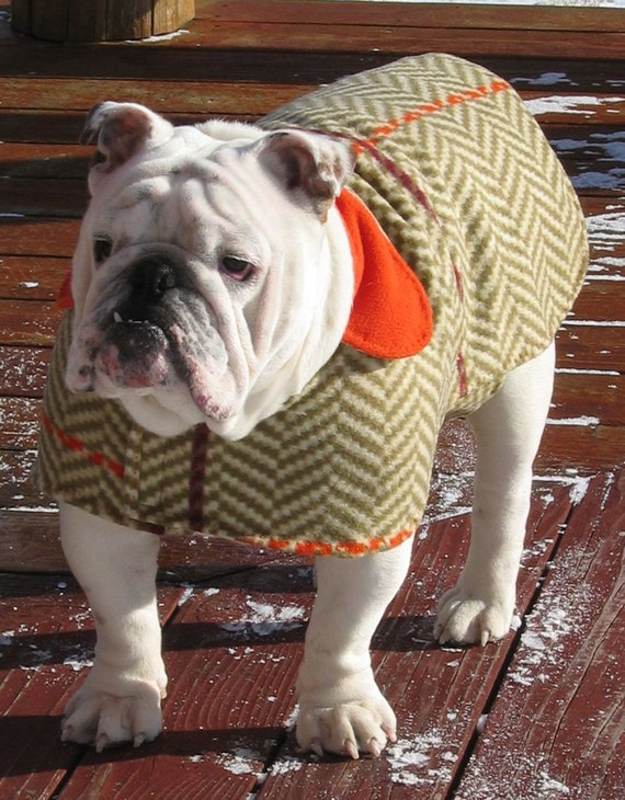 English Bulldog Reversible Coat Bulldog Custom Pattern