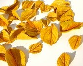 Edible Golden Aspen Leaves 2 Dozen Sugar Embellishments