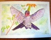 Hummingbird Treat - Original