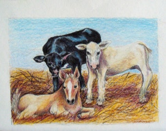 Colored Pencil Original Farm Babies