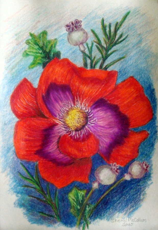 Red Flower Colored Pencil Drawing Painting 6 x 9 inch  Red Flower Colo...