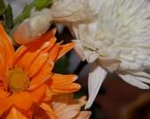 Spring Orange Cream