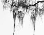 Abstract Silhouette of Tree in Black and White, South Africa