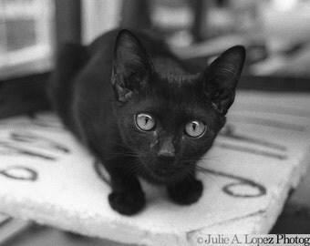 Black Cat Photography, Halloween, Curiosity, Thailand, Travel, Feline, Wonder, Eyes, Asia,  8x10 Black & White Print
